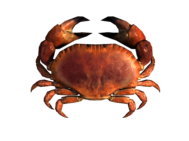 3D low poly model of the red crab